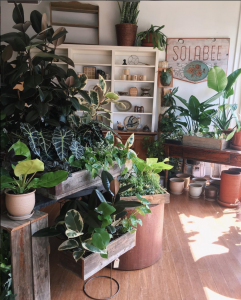 solabee flowers & botanicals, portland, oregon, plants, garden store